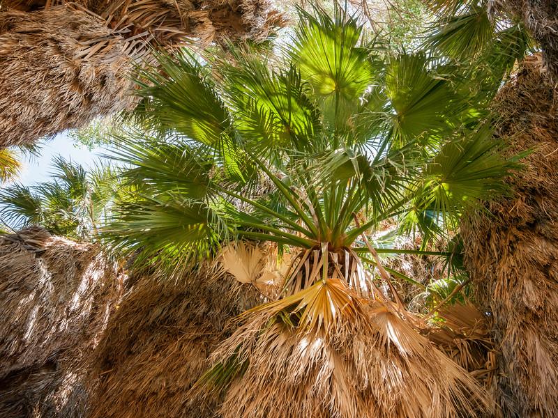 Joshua Tree NP 0164