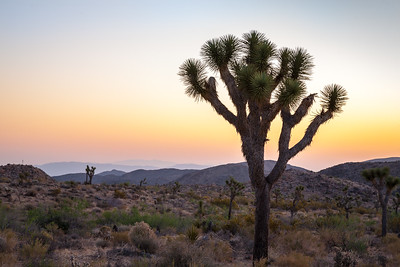 Joshua Tree NP 7998