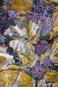 Point Lobos 1660