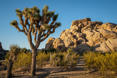 Joshua Tree NP 8054