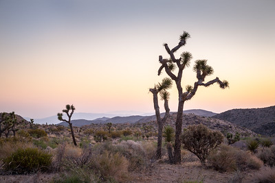 Joshua Tree NP 8004