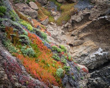Point Lobos 8910