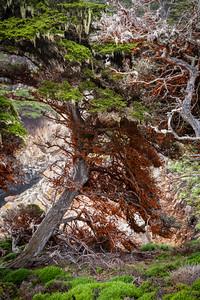 Point Lobos 9545