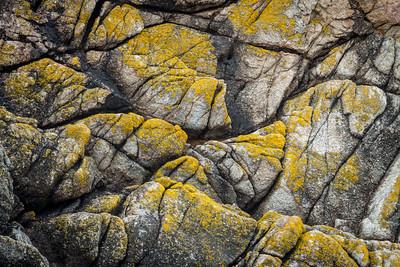 Point Lobos 1664