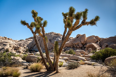 Joshua Tree, Barker Dam Nature Trail