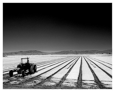 Tractor & Lettuce Salinas, California