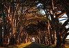 pt reyes-tree tunnel-9074
