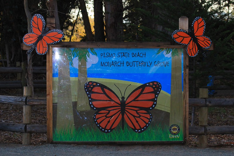 The sign at the Monarch Grove where this year an estimated 80,000 Monarch Butterflies were hanging out. They come here to breed, but are inactive on cold days like we had on our day there.