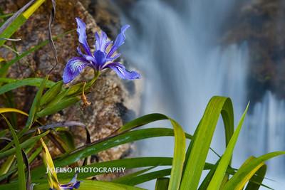 Iris and Falls-4509