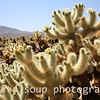 Desert Cactus Scene