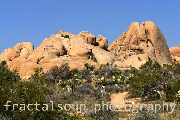 Desert green flora, rocky slope and blue sky