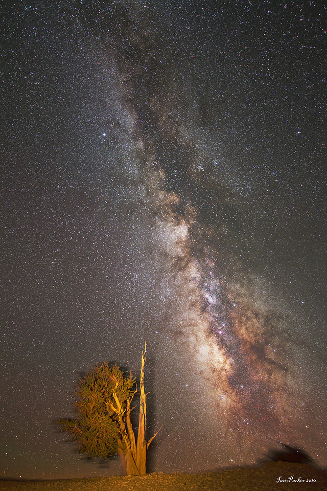 Milky Way and ancient bristlecone pine; White Mountains