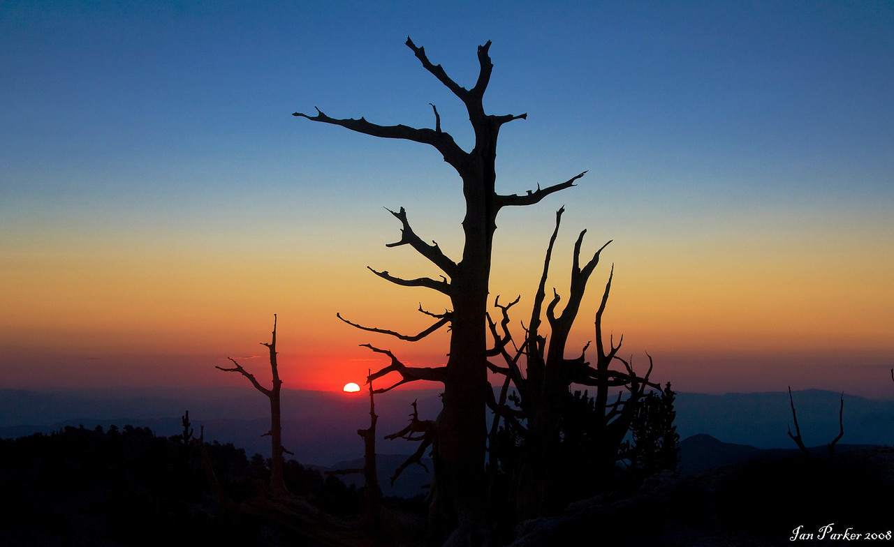 The millionth sunrise: Bristlecone Pine forest, White Mountains