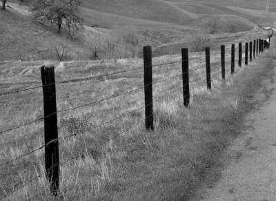 Vanishing line of fence posts.