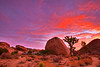 California, Joshua Tree National Park, Dawn, Rocks, Landscape, 加利福尼亚, 约束亚树国家公园, 黎明, 风景