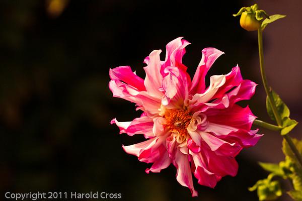 A flower taken Sep. 29, 2011 near Carmel by the Sea, CA.