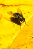 A fly taken June 14, 2011 near Bridgeville, CA.