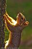 A Squirrel taken Sep. 28, 2011 near Merced, CA.