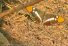 A butterfly taken Sep. 27, 2011 at Yosemite National Park.