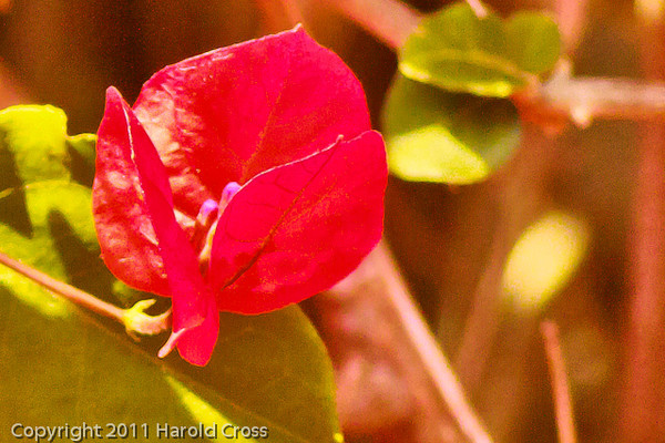 A flower taken Sep. 29, 2011 near Pebble Beach, CA.