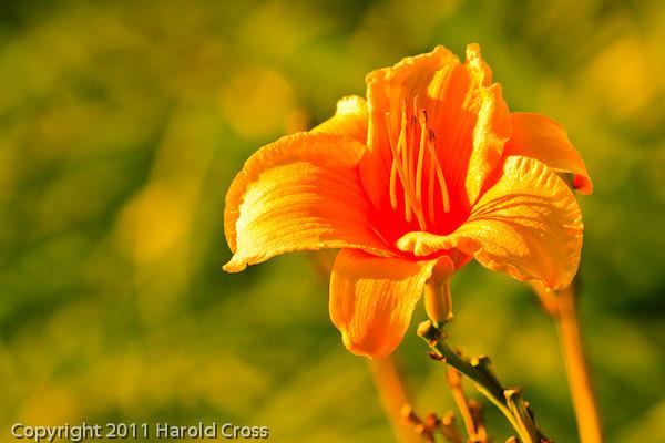 A flower taken Oct. 1, 2011 near Los Angeles, CA.