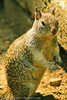 A squirrel taken Sep. 27, 2011 at Yosemite National Park.