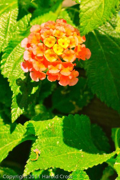 A flower taken Sep. 28, 2011 near Merced, CA.