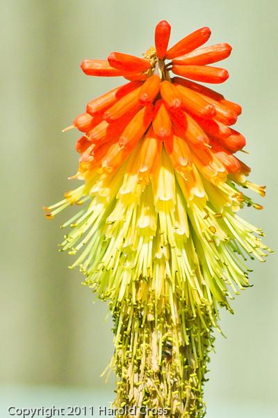 A flower taken June 11, 2011 near Trinidad, CA.