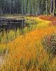 Early morning, fall. Siesta Lake