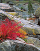 Fall color along south fork of Tuolumne River