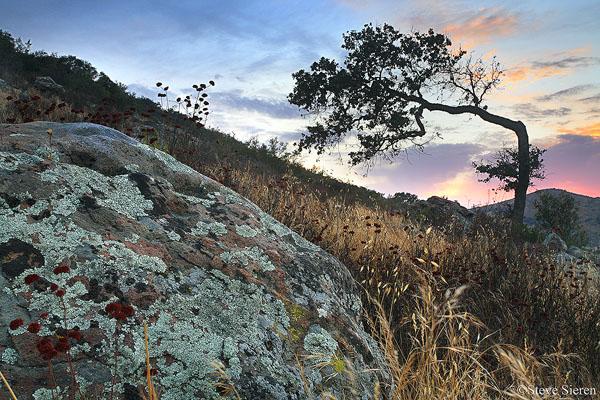 Bent Oak Sunset  Santa Monica Mountains