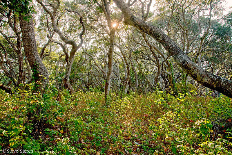 Central California Coast