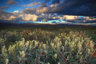Great Plains of California