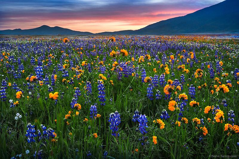 Bear Mountain Wildflowers Spring Sunset California