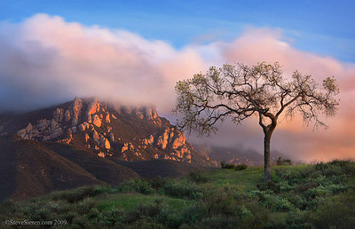 Coastal Oak and Boney Mountain, Santa Monica Mountains Southern California