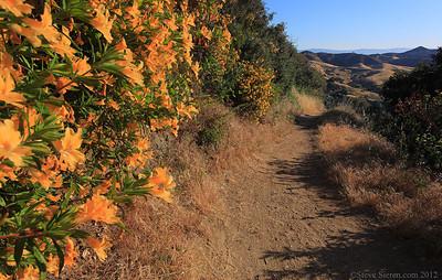 Hiking trails Santa Clarita Valley, spring bloom Placerita Canyon May 2012.