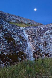 Lichen at Dawn Central California