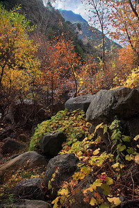 Fall color in a creek only minutes away from downtown Los Angeles.  Santa Monica Mountains.