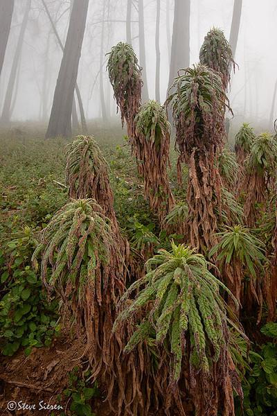 Palomar Mountain North East of San Diego