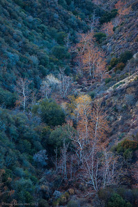 Sand_Canyon_Fall_Color_Angeles_National_Forest