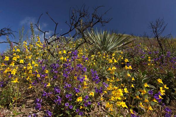Angeles National Forest - San Gabriel Mounains