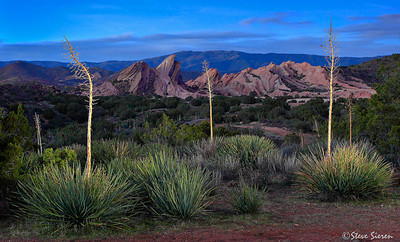 God's Candles (whipple yucca) at Vasquez Rock