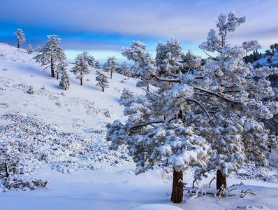 Los Angeles Winter Snow Mountain Trees photo Southern California