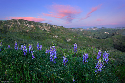 Santa Susana Mountains Spring Wildflowers - Los Angeles Nature