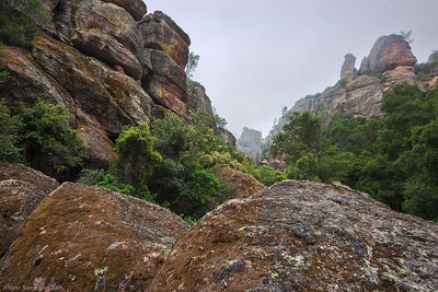 Lichen covered boulders in the foggy chaparral at Pinnacles National Park.