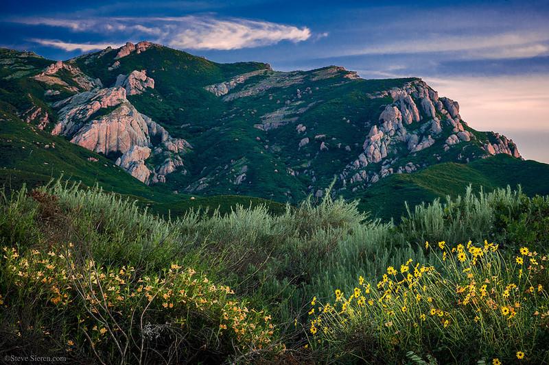 Boney Mountain Wildflowers Santa Monica Mountains Los Angeles