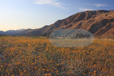 Evening, Anza-Borrego Desert
