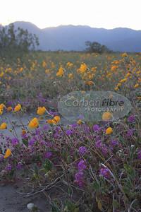 Field of Dreams, Anza-Borrego Desert