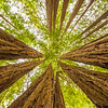 Up-Through_Trees-Base_D8X4896