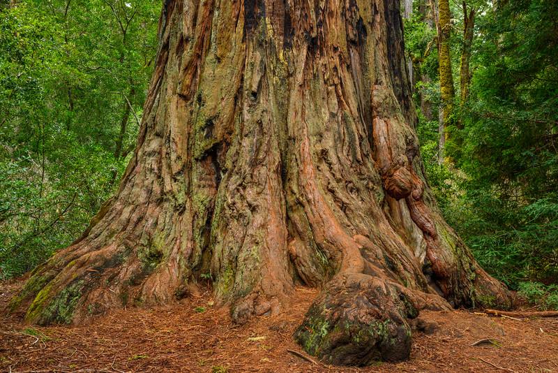 Big-Basin-State-Park-California-State-Parks-Redwoods_D8X4803